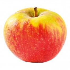 Appel Elstar  per stuk (nieuwe oogst)